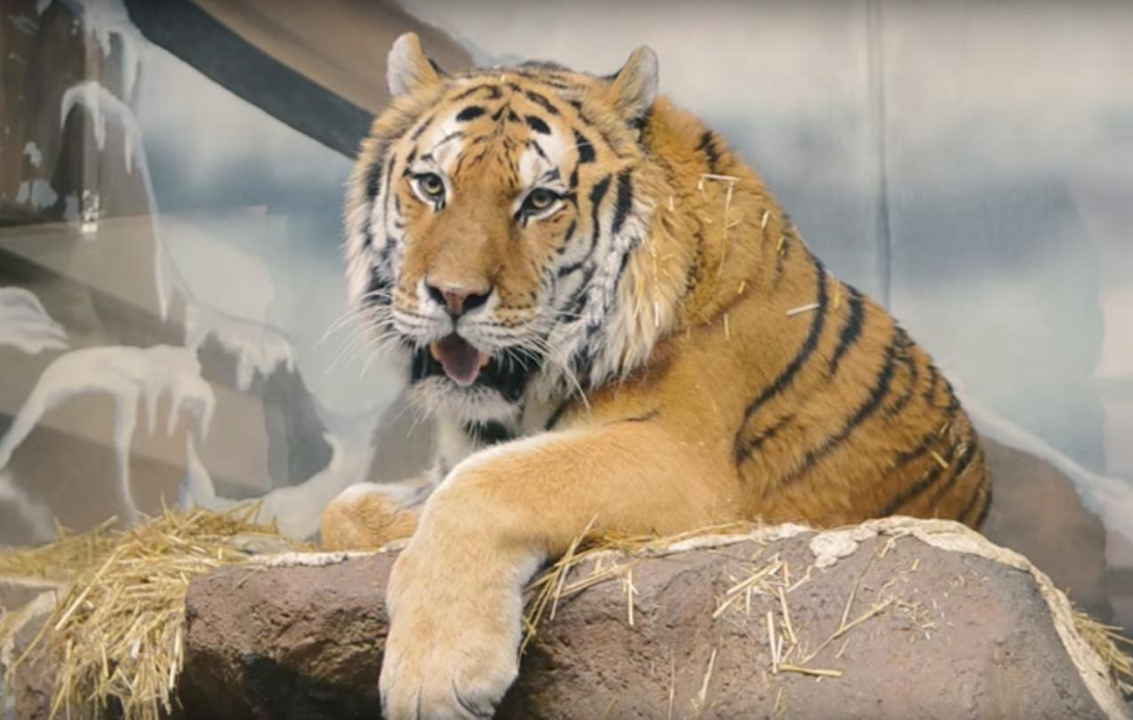 Potter Park Zoo